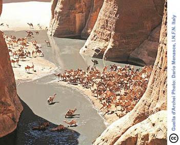 GueltaCamels_x