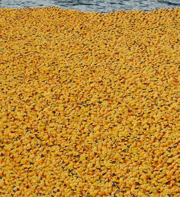 Moby-duck, ocean odyssey, 28800 ducks lost, travel, hemispheric adventure, following curiosity road, Fresh Air, ducks at sea,