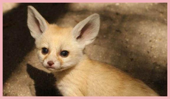 lemurs, lions, emus, fennecs, animals born in captivity, zoo births 2013, spring births,