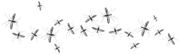 why mosquitoes bite, bottom rung of the ecosystem, summer pests, mosquito life cycle, things that drive me crazy, mosquito buzzing