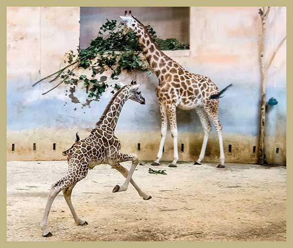 zoo babies, summer zoo births, baby animals, births in captivity,