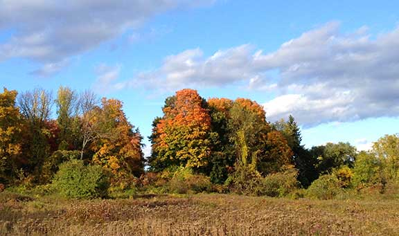 weekend travel, things to do in the Berkshires, mike's maze, falconry, halloween, pumpkins, entertainment, fall foliage