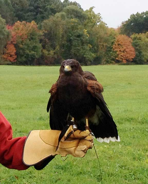 weekend travel, things to do in the Berkshires, mike's maze, falconry, halloween, pumpkin picking, entertainment, fall foliage