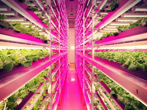thecuriousg-japan-indoor-farming