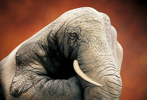 Guido Daniele, homage to elephants, elephant art, sand sculpture, mechanical sculpture, origami animals, paper sculpture, animal protection, human and wildlife coexistence