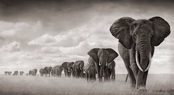 nick brandt, homage to elephants, elephant art, sand sculpture, mechanical sculpture, origami animals, paper sculpture, animal protection, human and wildlife coexistence