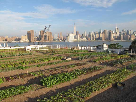 rooftop art installations, unseen views from the streets, big city rooftop art, rooftop life, conversions of urban rooftops, urban farming, rooftop farming, what's happening in New York, bivouac in New York, techno pigeons, urban camping, Eagle Street Rooftop Farm, Brooklyn Grange,